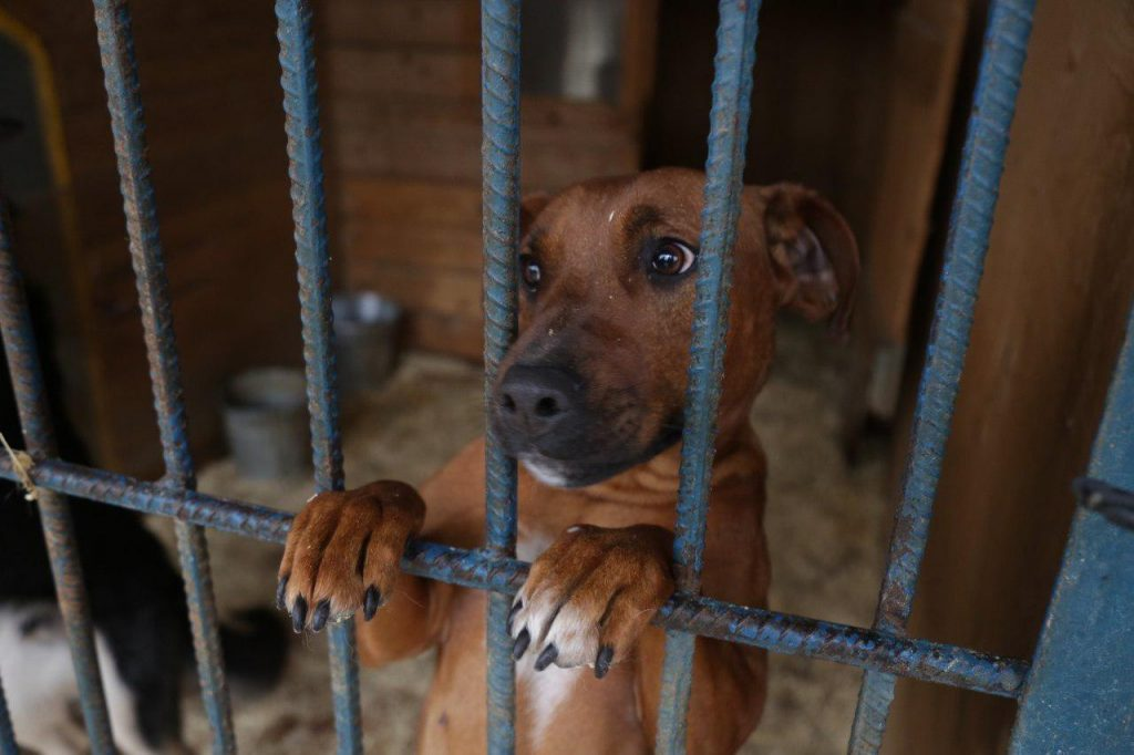 В приюте для животных «Дубовая роща» пройдет благотворительная акция