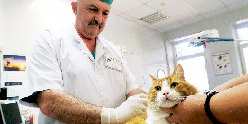 Вакцинация собак и кошек пройдет в Отрадном в мае